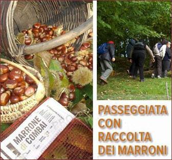 MIANE COMBAI PASSEGGIATA CON RACCOLTA MARRONI E CASTAGNE