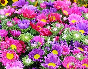 Related Keywords & Suggestions for immagini di fiori
