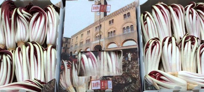 Treviso 108 antica mostra del radicchio rosso di treviso for Mostra treviso