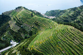 TREVISO VINI DA TERRE ESTREME viticoltura eroica