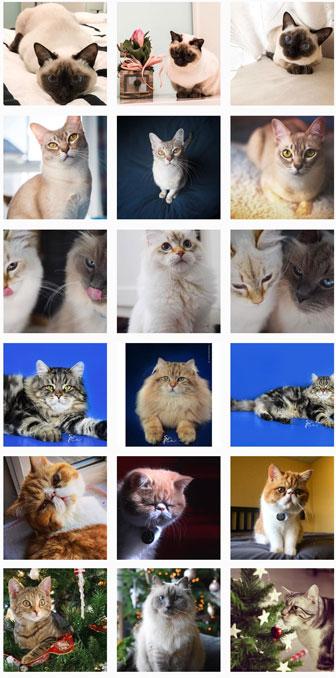 villorba esposizione internazionale felina mostra i gatti