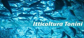 breda di piave itticoltura tonini allevamento trote
